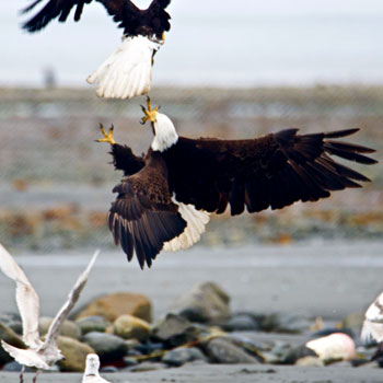 Photo credits Page - Great Alaska Adventures