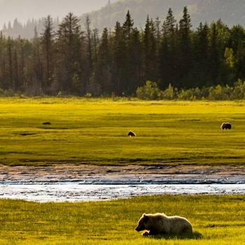 Sustainable Bear Viewing